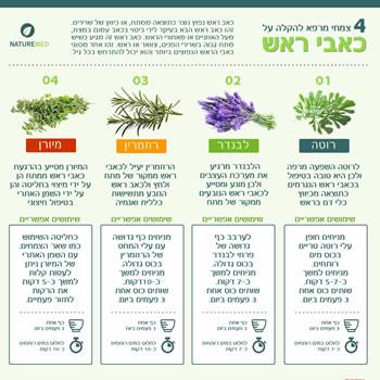 צמחי מרפא להקלה על כאבי ראש