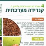 צמחי מרפא לקנדידה