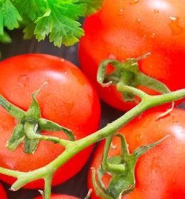 סגולת רפואיות של עגבנייה
