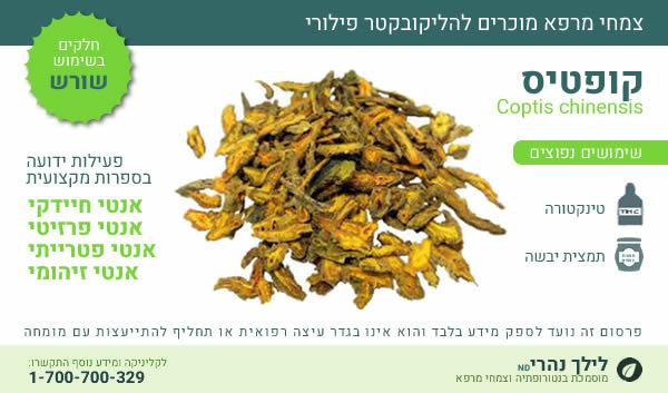 קופטיס - צמחי מרפא להליקובקטר פילורי