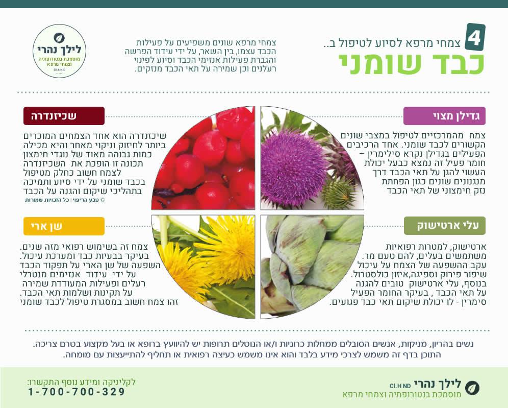 צמחי מרפא לטיפול בכבד שומני