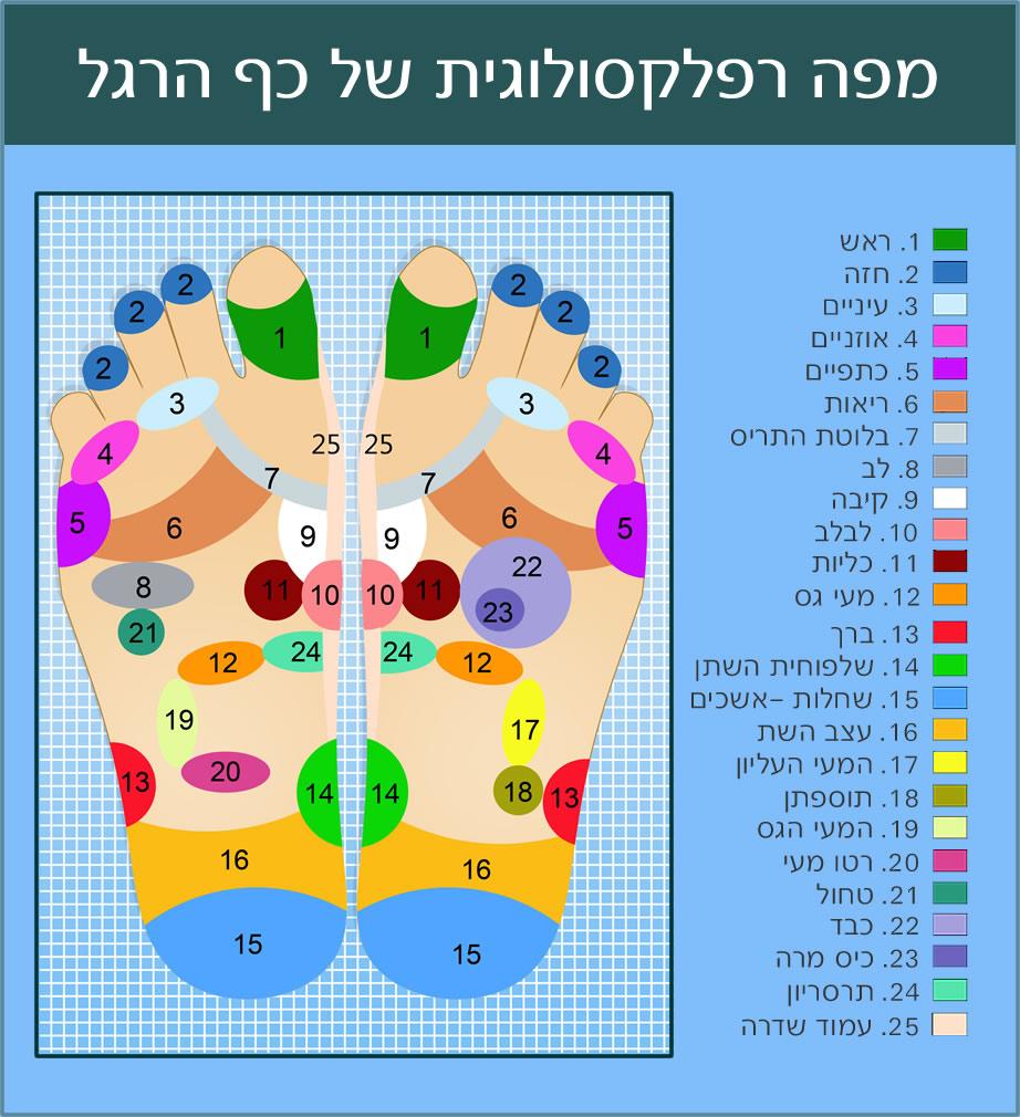 מפה רפלקסולוגית של כף הרגל